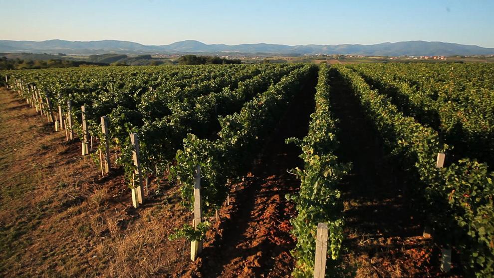 zasadi vinarije aleksandrović vino