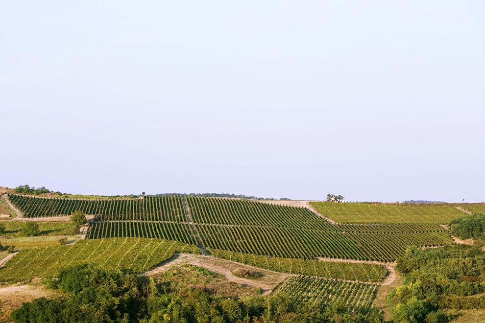 vinarija bikicki vinogradi i proizvodnja vina
