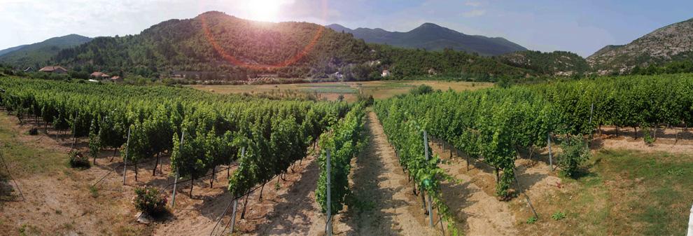 carski vinogradi vukoje