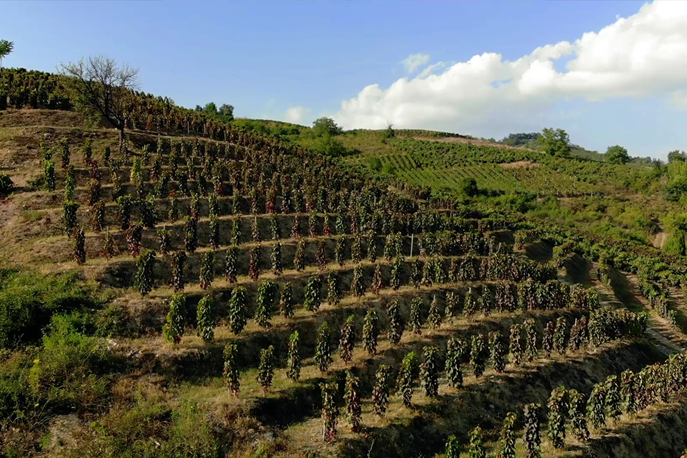 vinogradi-budimir