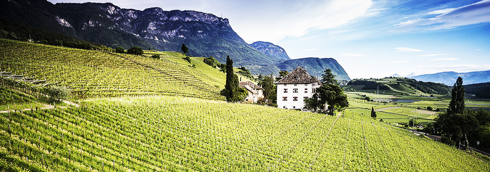 italijanska vinarija elena walch