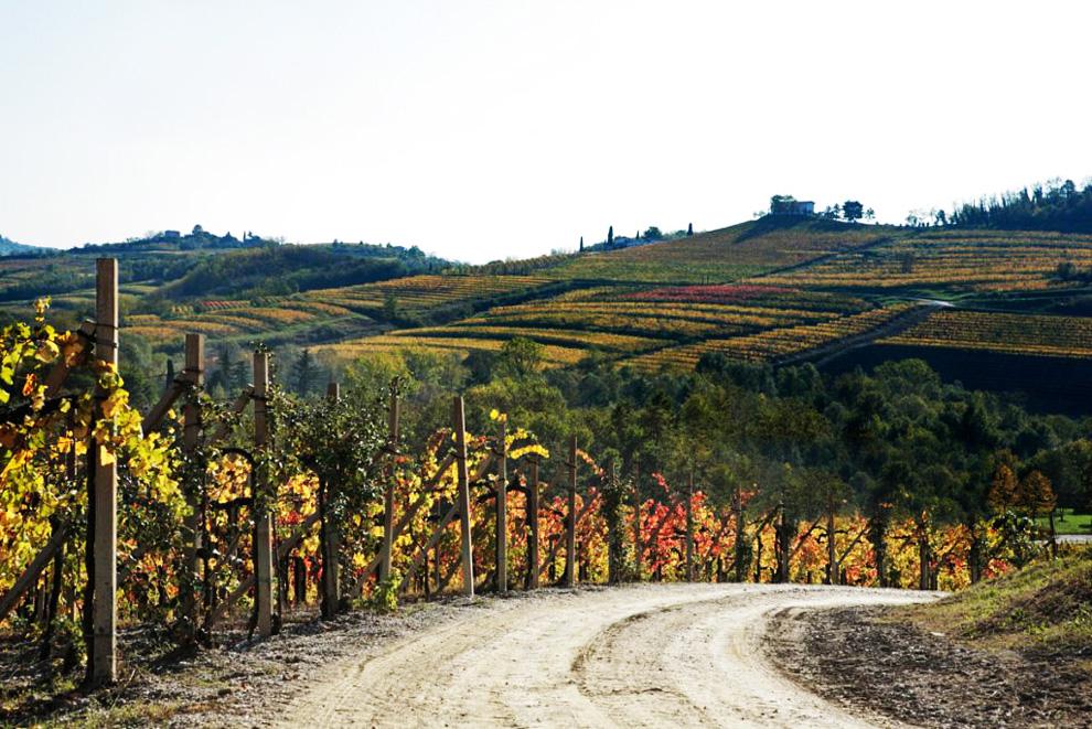 vinarija fantinel proizvodnja vina