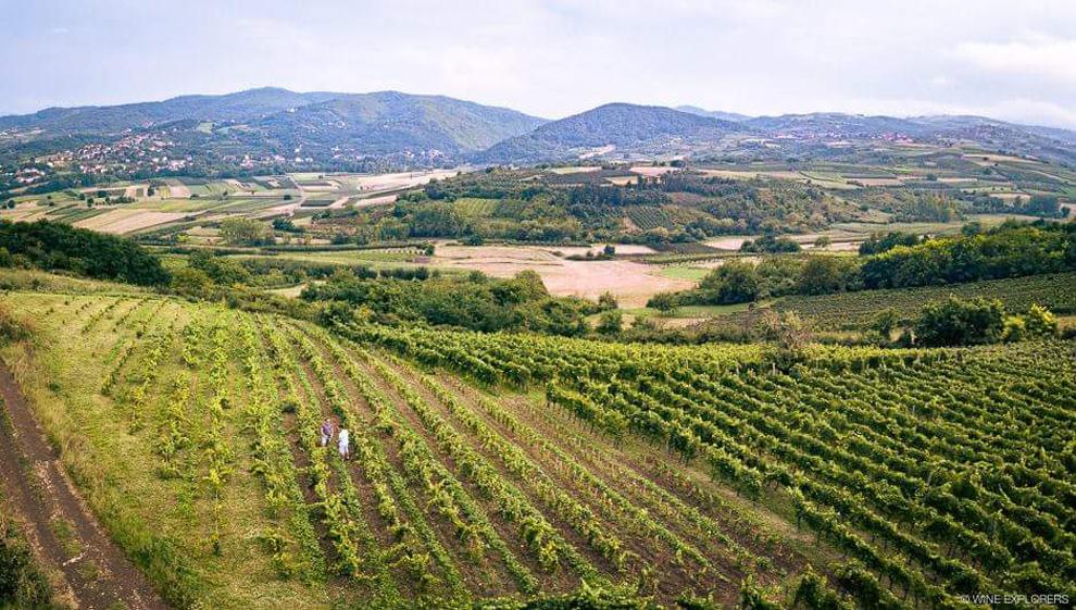ivanović-vinogradi