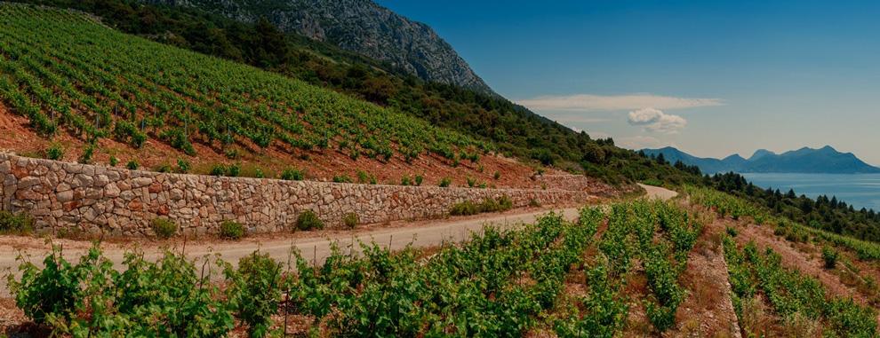 korta katarina vinogradi