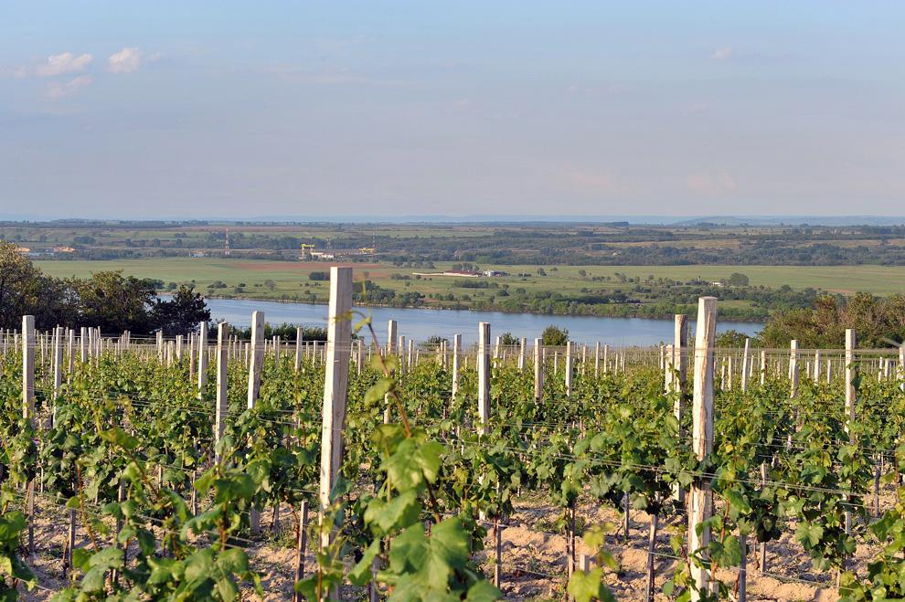 vinarija matalj vinograd terasa