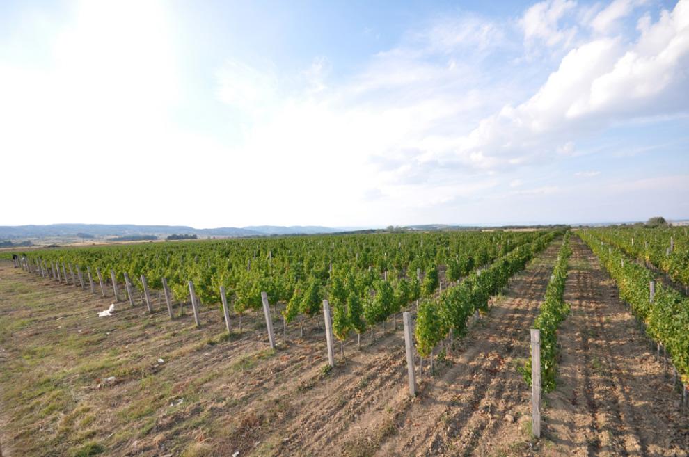 vinarija matalj vinogradi proizvodnja vina