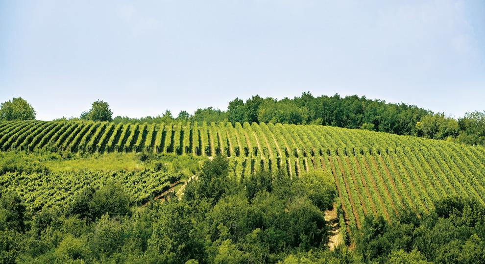 vinarija radovanovic vinogradi