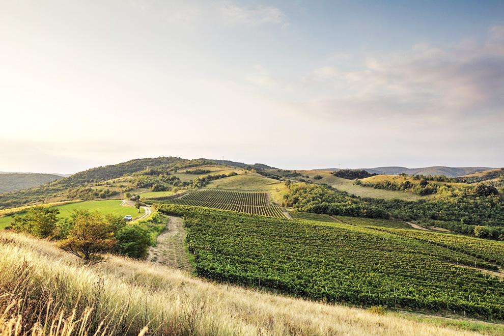 vinarija bikicki i vinogradi