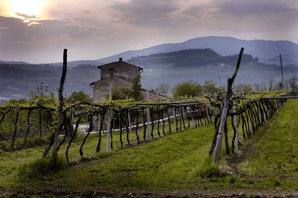 vinogradi vinarije Masi italija