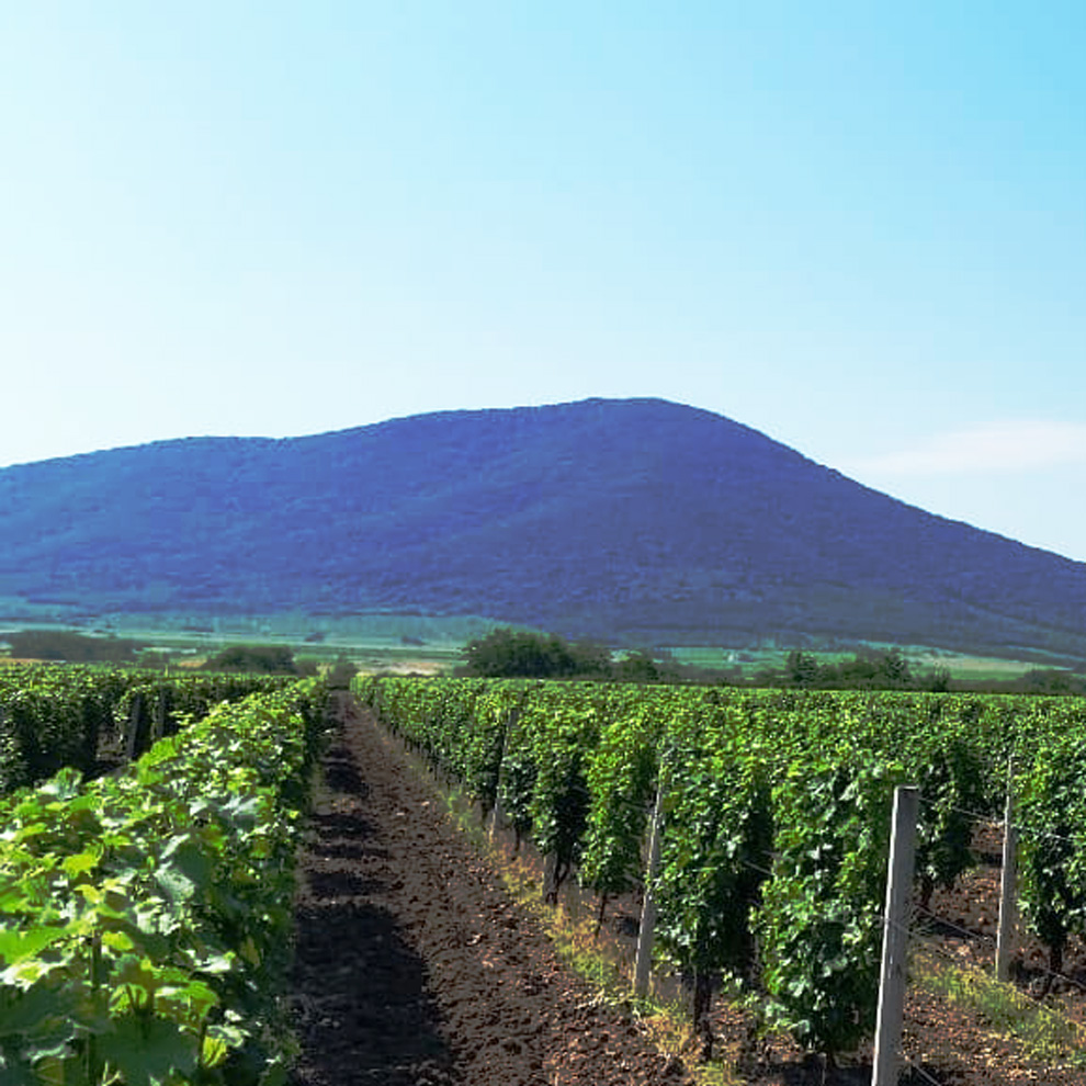 vinarija rnjak vinogradi