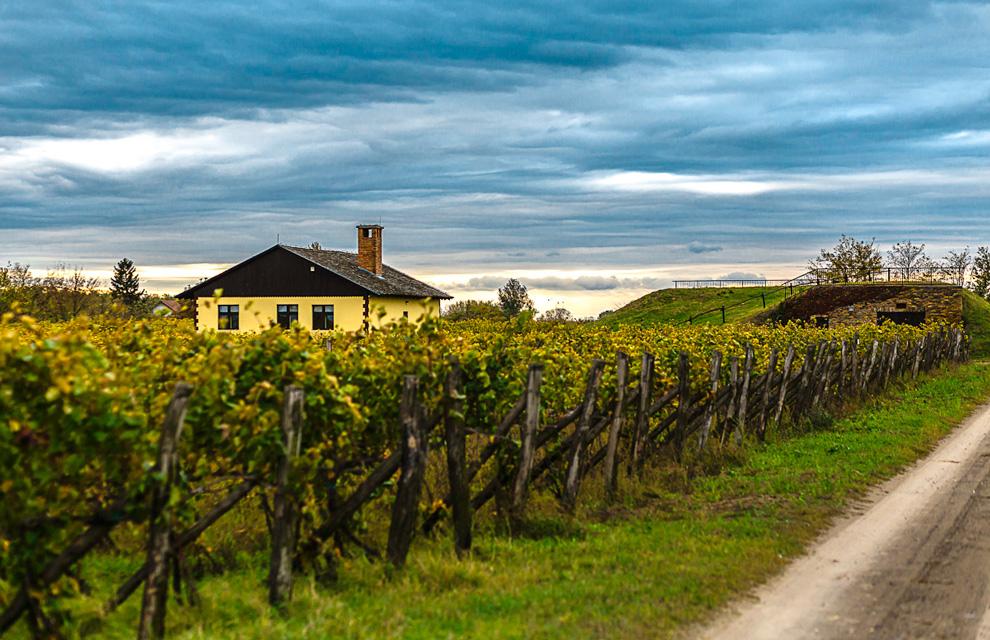 vinarija tonkovic vinogradi