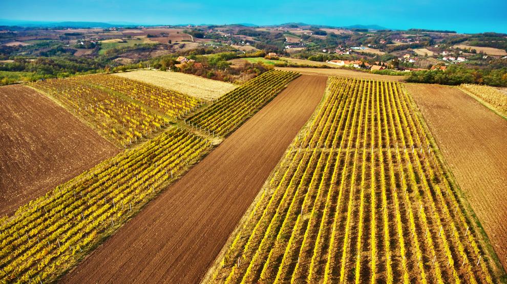 vinarija vinis zasadi grožđa