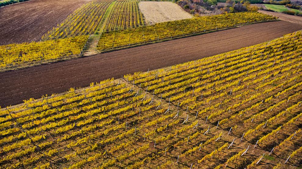 vinarija vinis vinogradi jagodina