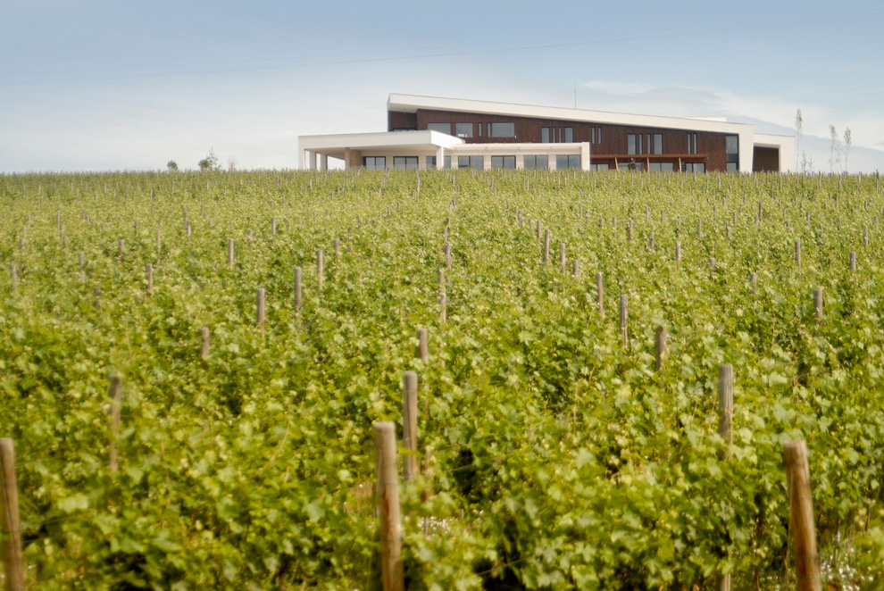vinogradi vinarije temet