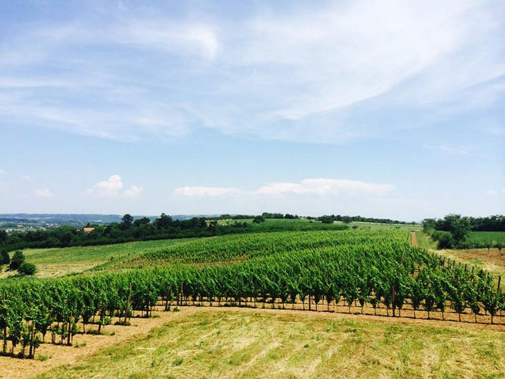 vinarija veličković vinogradi