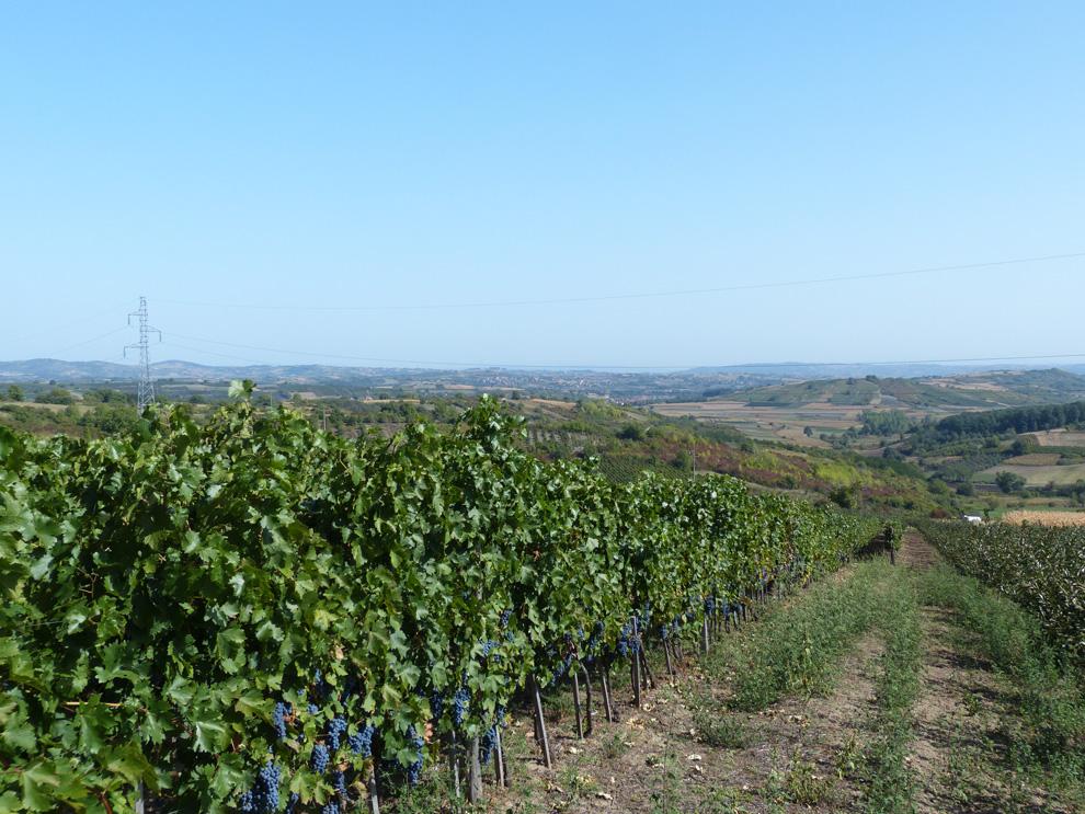 vinogradi-yotta