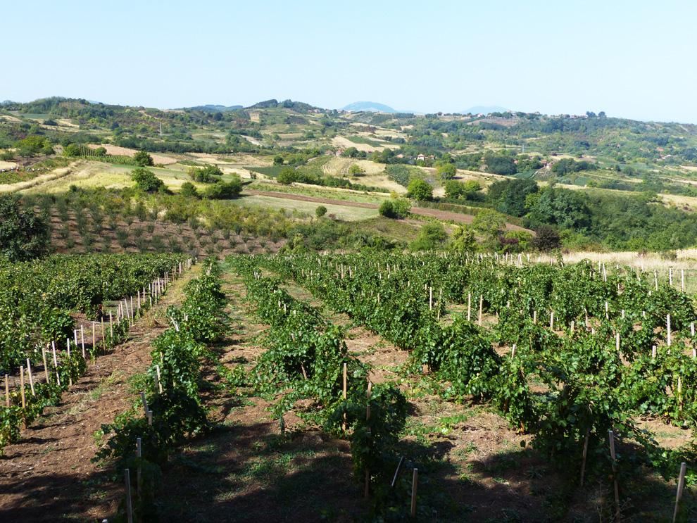 župski-vinogradi
