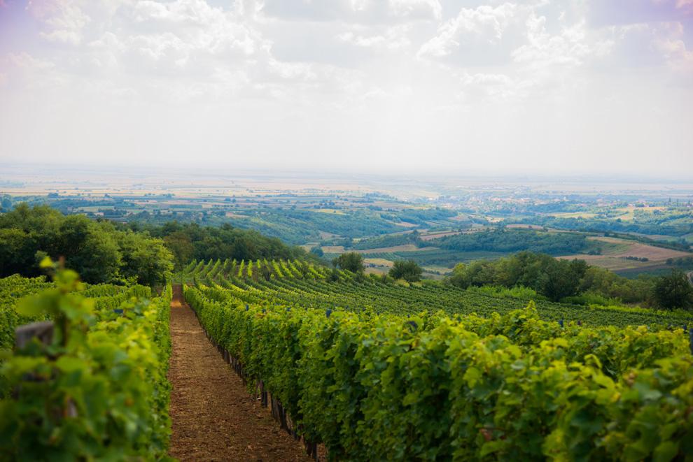 kovacevic-vinogradi