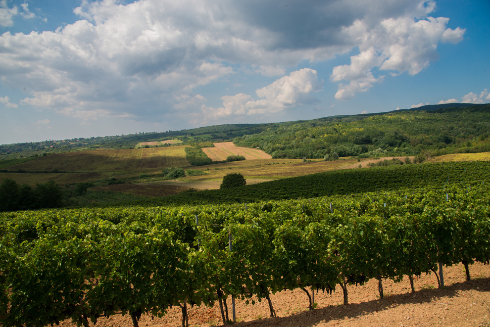 vinogradi-kovacevic