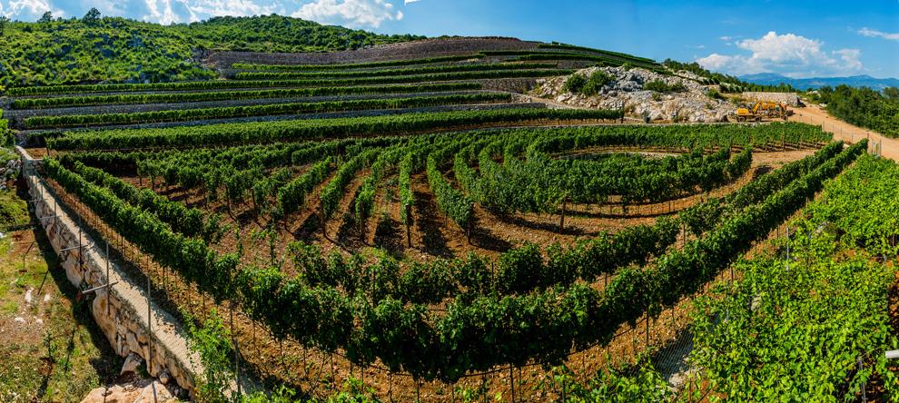 lipovac-vinogradi